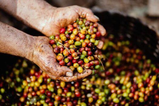 Investera i kaffe